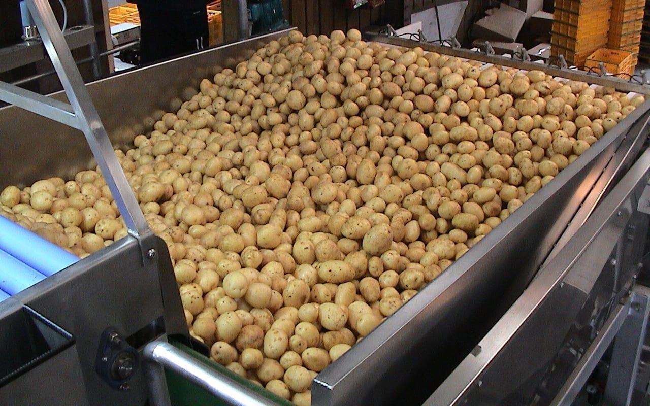 Evenflow hopper for potatoes
