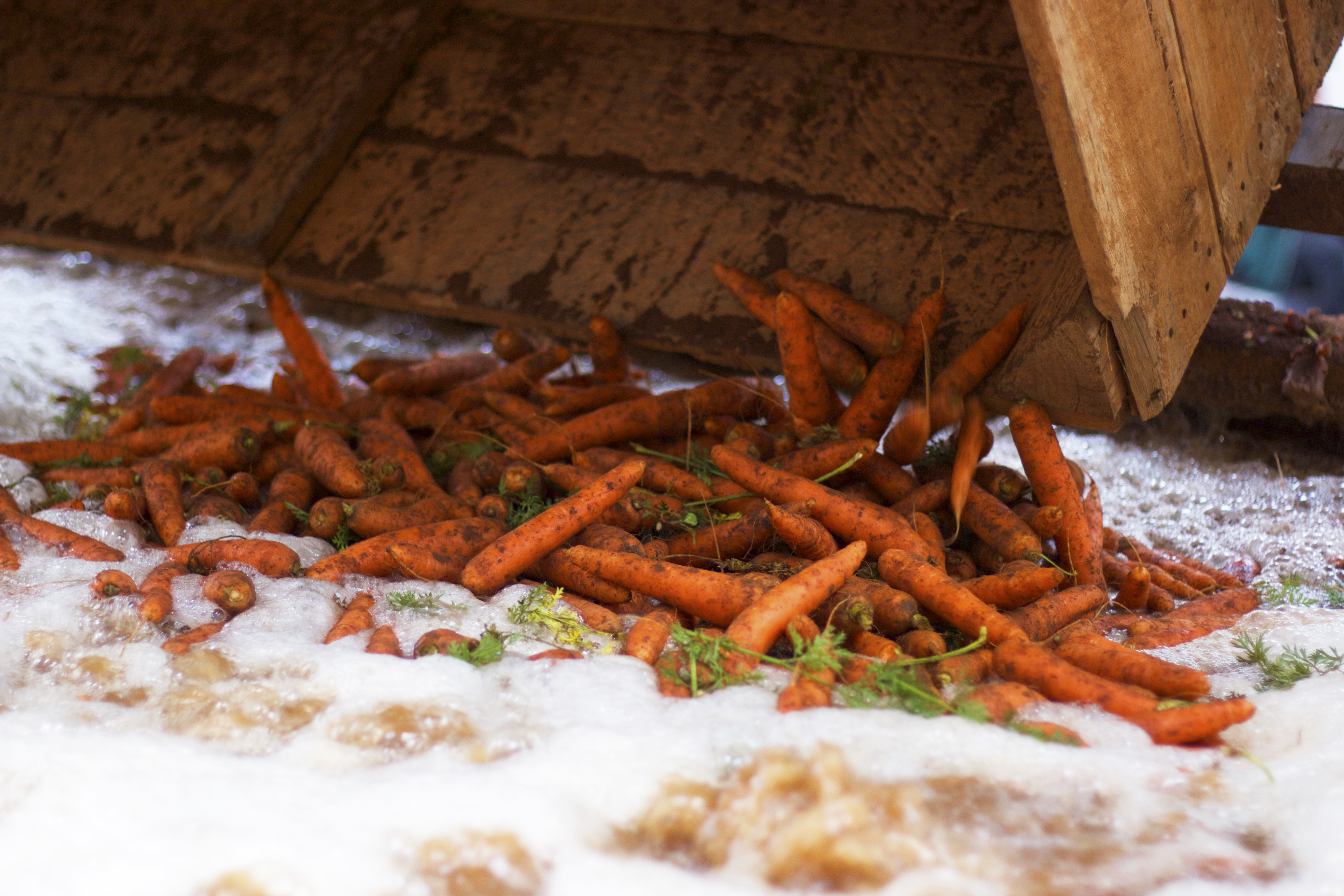 Large carrot grower and packer values collaborative approach