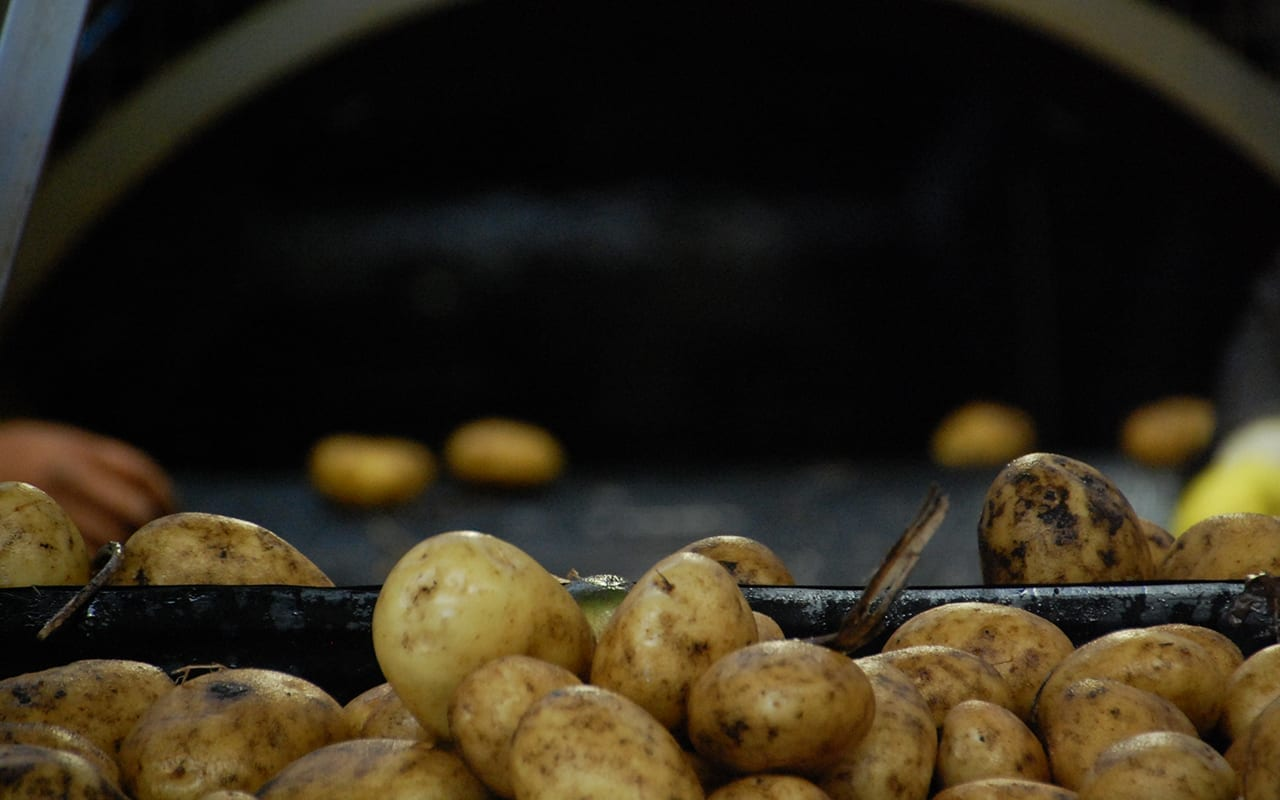 Want to avoid potato bruising and increase profit?
