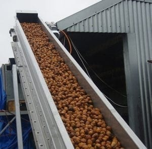 Walnut experts choose Wyma processing line over French competitors