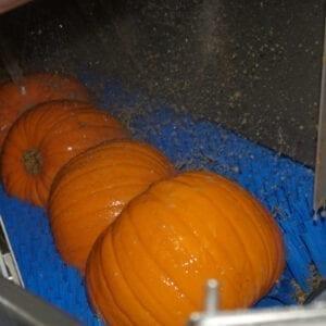 006-B-Pumpkin-Brusher-9-1-300x300