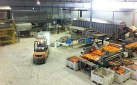 Ivankovich carrot packhouse