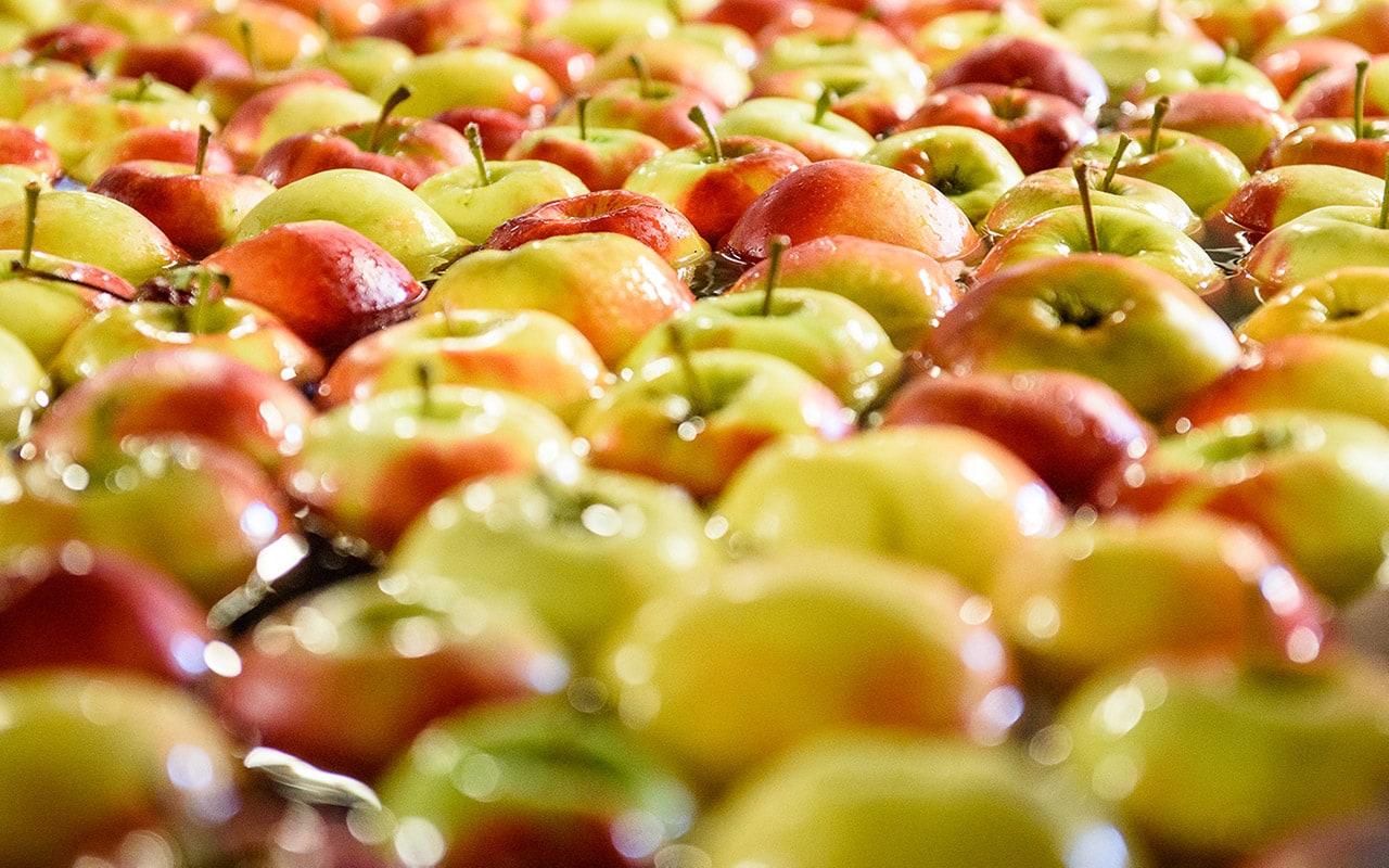 floating apples