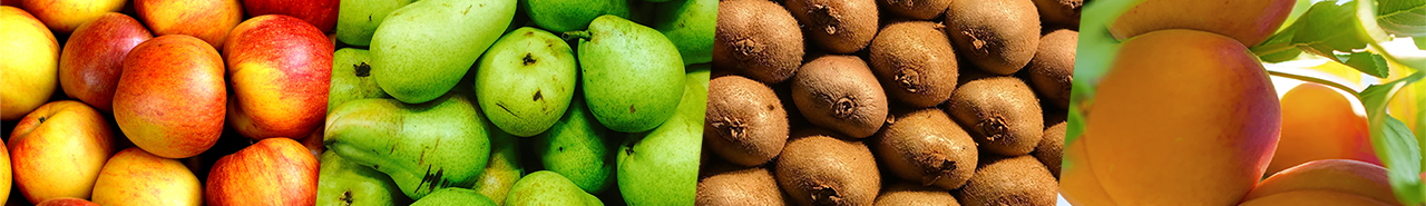 banner of apples, pears, kiwifruit and apricots